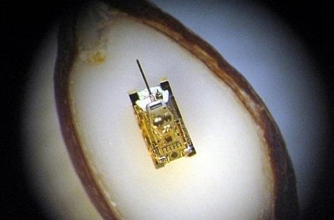 Tanque em miniatura em ouro