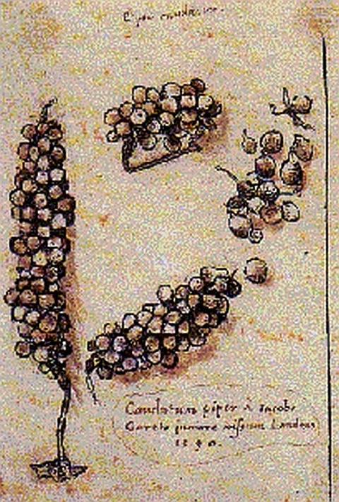 Desenhos jóias
